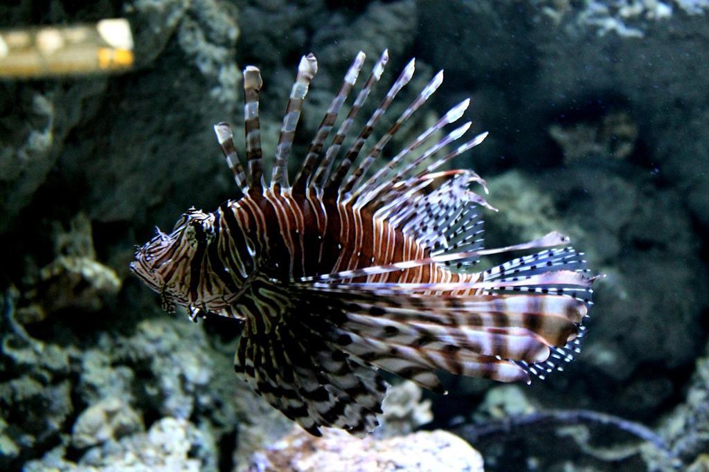 Poznaj życie głębin odwiedzając piękne oceanarium